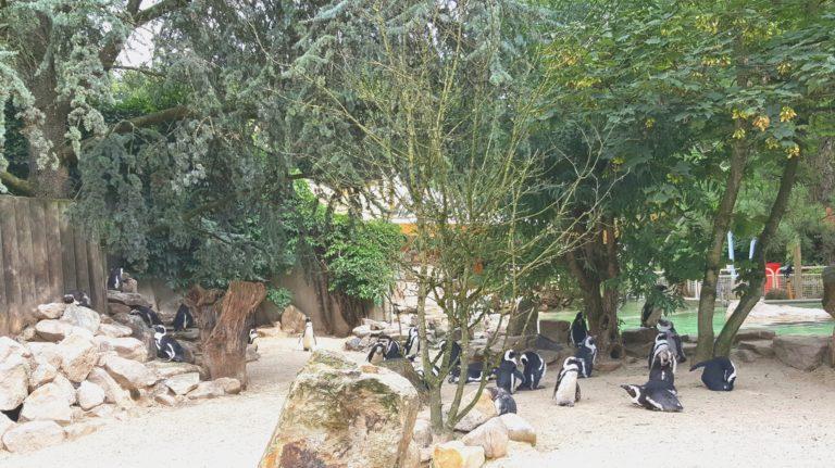 Besuch des Allwetter-Zoo in Münster